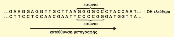 Αλληλουχία γονιδίων