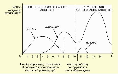 Καμπύλη πρωτογενούς ανοσοβιολογικής απόκρισης